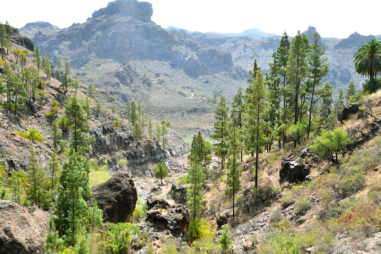 Gran Canaria part 2: Nature and culture treasures - Design ...